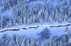 Blues of winter