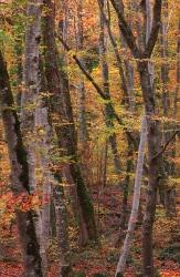 Impressions - Autumn