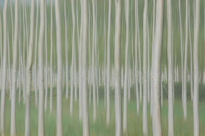 Homenaje a Touluse-Lautrec